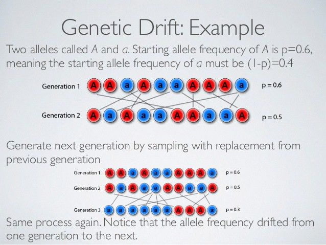 Good example of genetic drift - jkctzpp