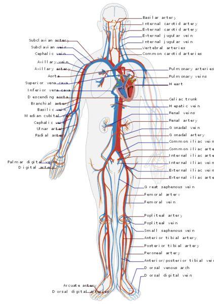 Cardiovascular Technologist Schools