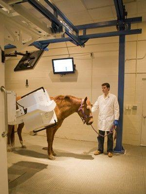 Nuclear Medicine - Texas A&M Veterinary Medical Teaching Hospital ...