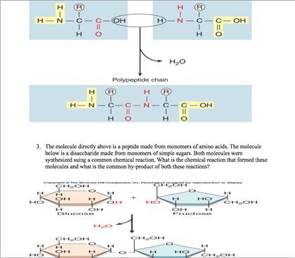Biology Archive | December 04, 2011 | Chegg.com