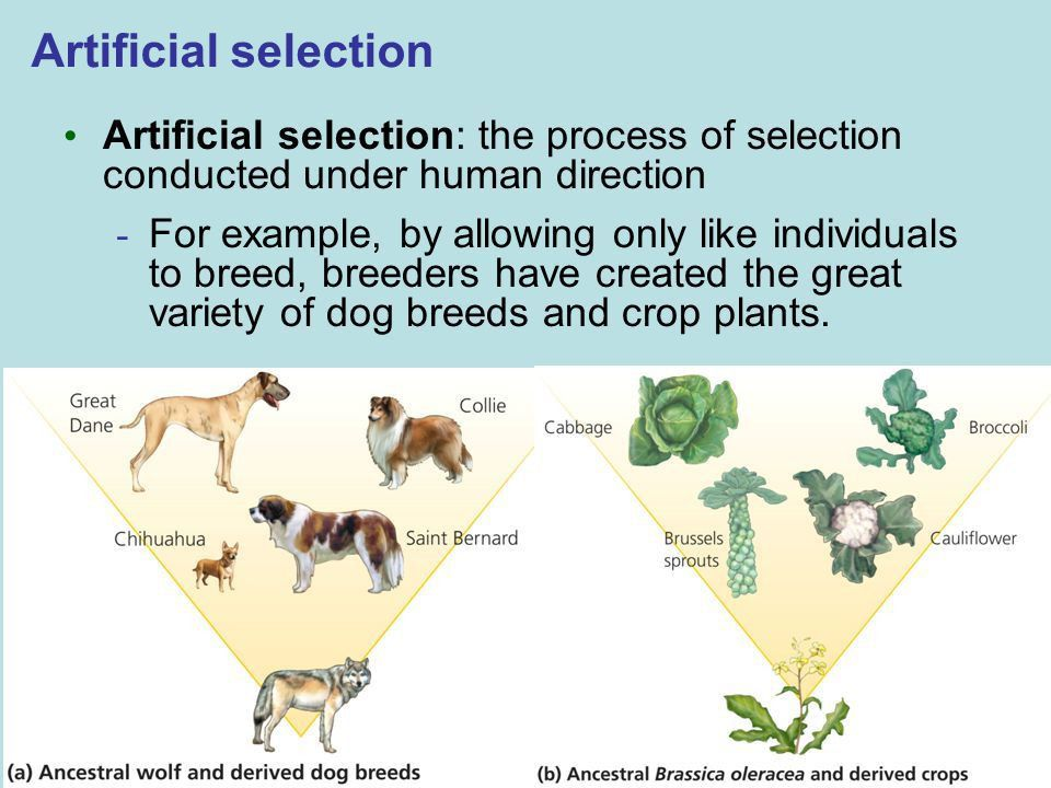 What are 3 differences between natural selection and artificial ...