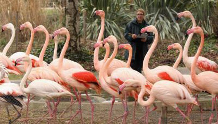 Florida Colleges That Offer Zoology   Synonym