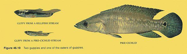 BIO 304. Ecology & Evolution: Population Genetics