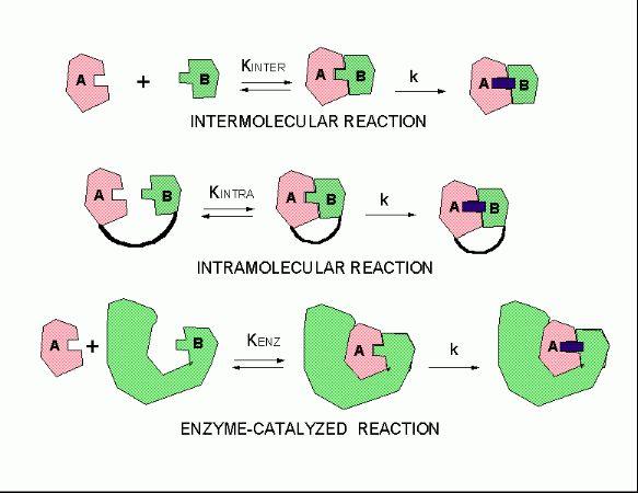 A4. Intramolecular Catalysis - Biology LibreTexts