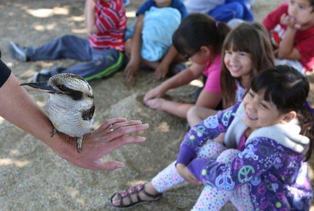 Elementary school students experience little safari — PHOTOS – Las ...