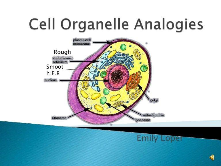 cellorganelleanalogies-090924192813-phpapp02-thumbnail-4.jpg?cb=1253820525