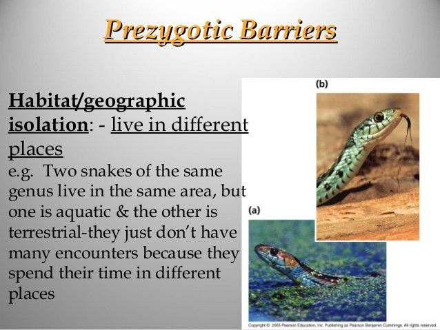 Speciation prezygotic and postzygotic