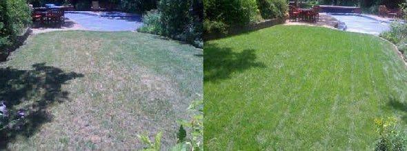 Fort Worth organic lawn treatment for a healthy lawn