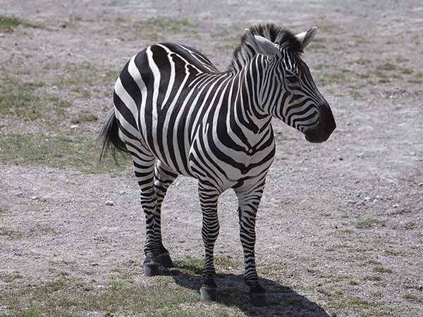 Toledo Zoo » Employment Opportunities