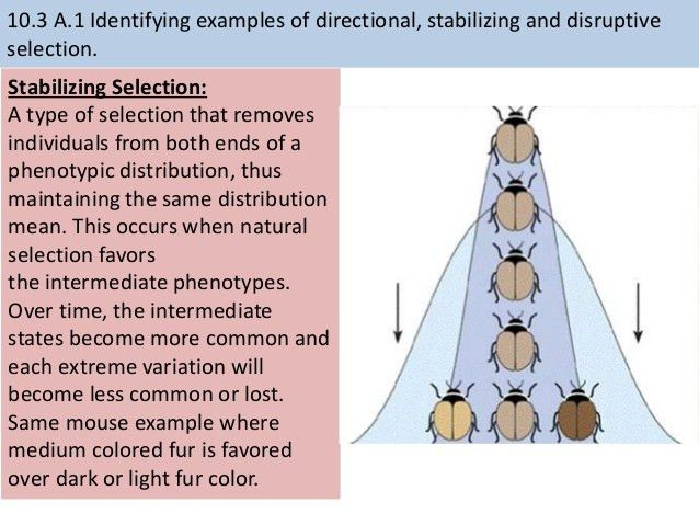 10.3 gene pools and speciation