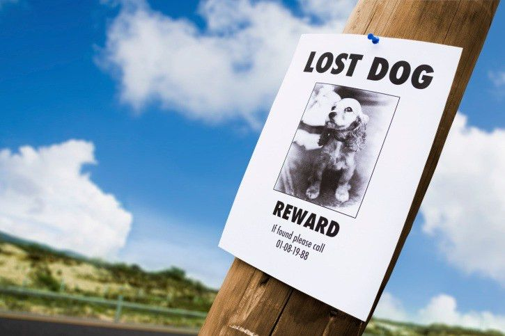 Tips for an Effective 'Lost Dog' Poster - The Dogington Post
