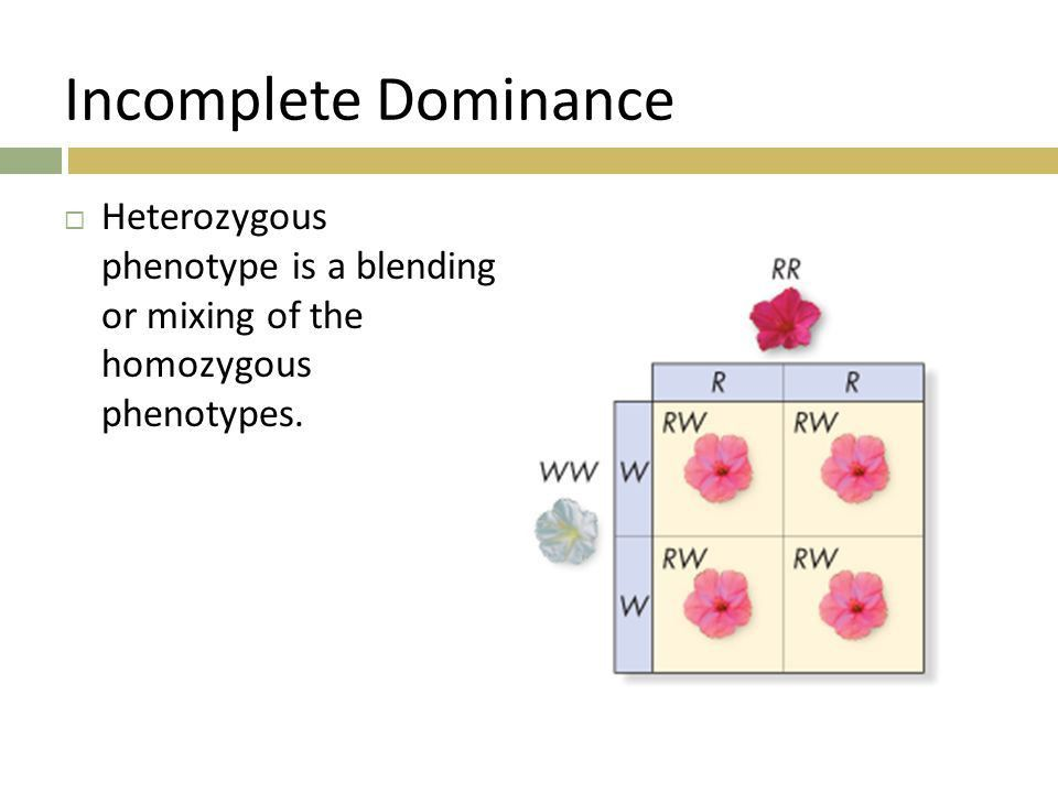 Review What does incomplete dominance mean and give an example ...