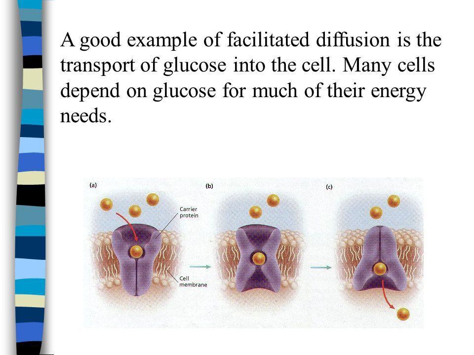 Cell Membrane Structure & Cellular Transport - ppt download