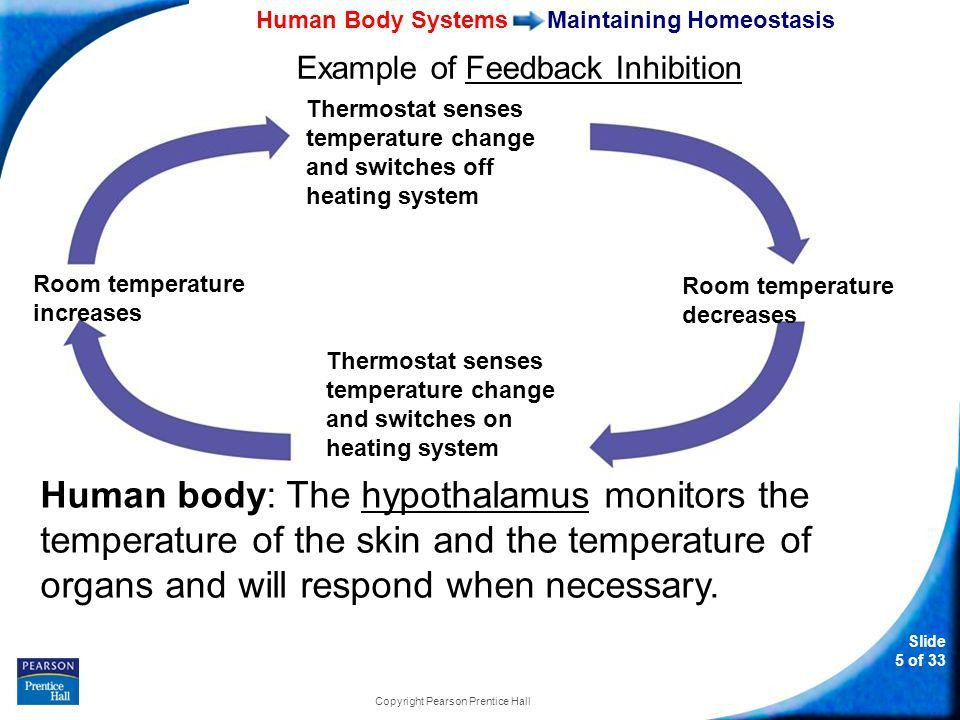35–1 Human Body Systems Slide 1 of 33 Copyright Pearson Prentice ...