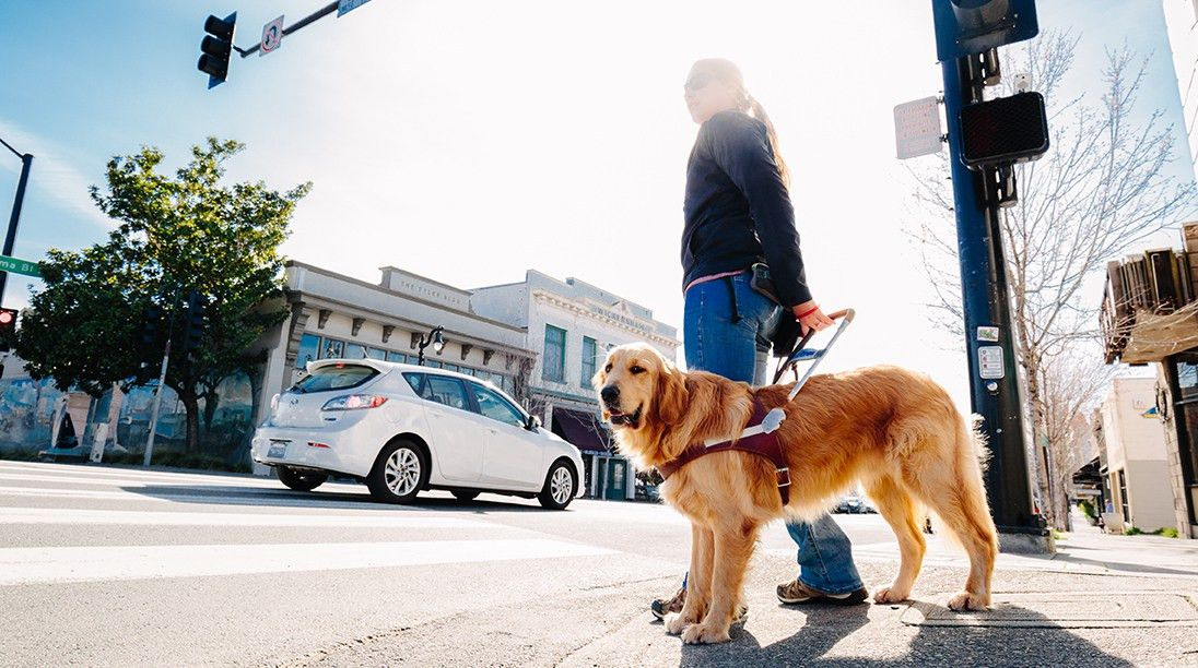 Guide Dogs For The Blind | Careers