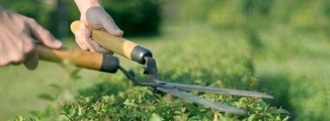 Vital Tools for Easy Lawn And Also Garden Maintenance | Victoria ...