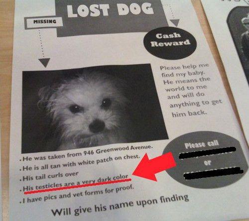 19 Hilarious Lost Pet Fliers Gallery   SMOSH