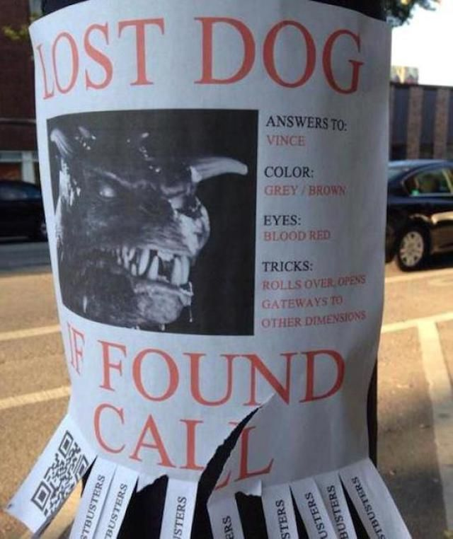 43 best Lost and found... images on Pinterest | Funny stuff ...