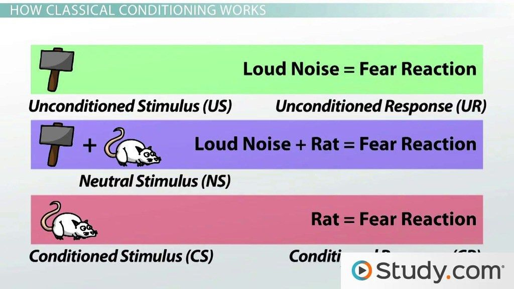 Classical Conditioning in Psychology: Definition, Principles ...