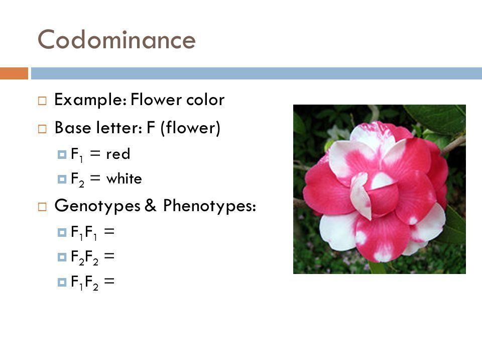 7.2 Dominance & Blood Type. - ppt download