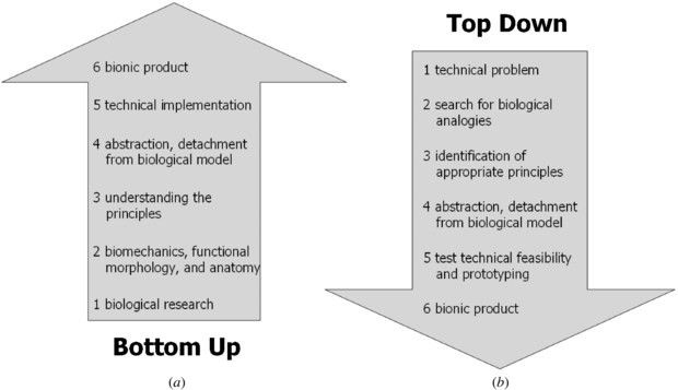top down vs bottom up change You've probably heard of top-down and bottom-up in context of business management project management has taken these management approaches and.