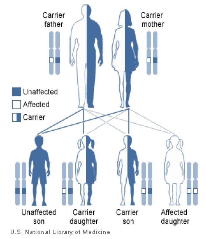 Human Inheritance ‹ OpenCurriculum