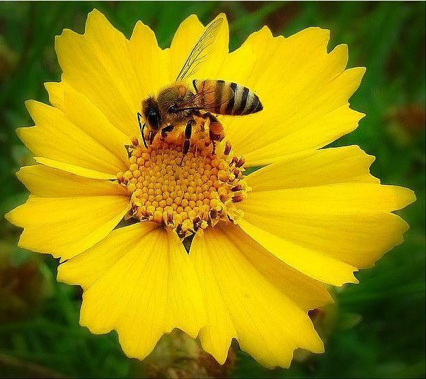 Symbiosis | Shane McLendon's Amazing Biology Blog
