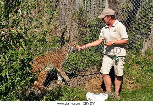 Zoo Keeper Stock Photos & Zoo Keeper Stock Images - Alamy
