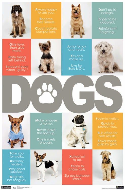 DOGS ~ ALPHABET SAYINGS 22x34 ANIMAL POSTER Dog Breeds Animals ...
