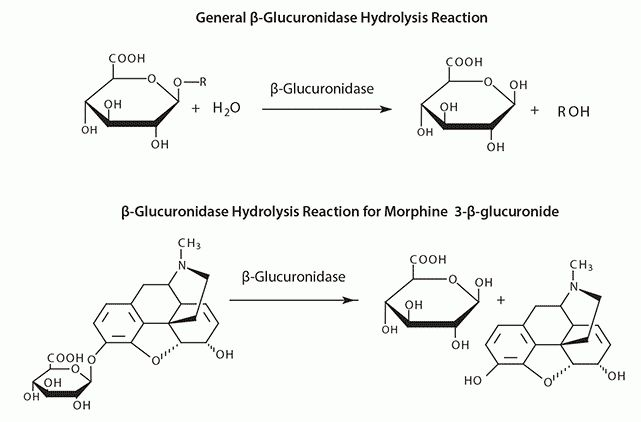 UHPLC/MS of Drugs and Metabolites in Urine following Enzymatic ...