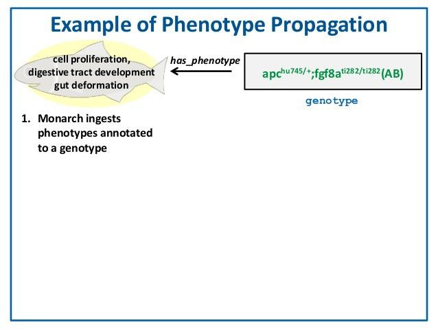 What's In a Genotype?: An Ontological Characterization for the Integr…