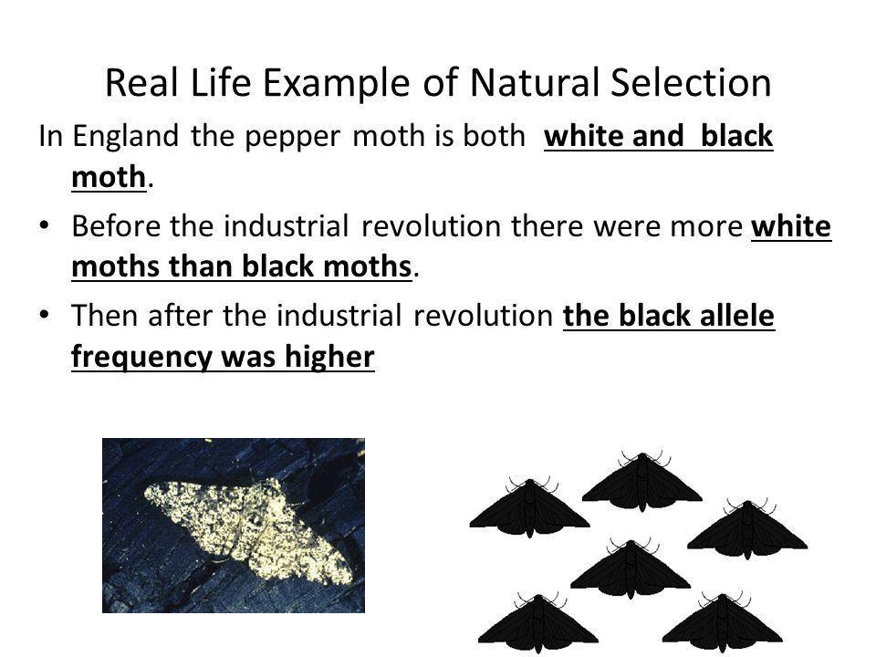 Variation and Natural Selection. Evolution Basics Changes that ...
