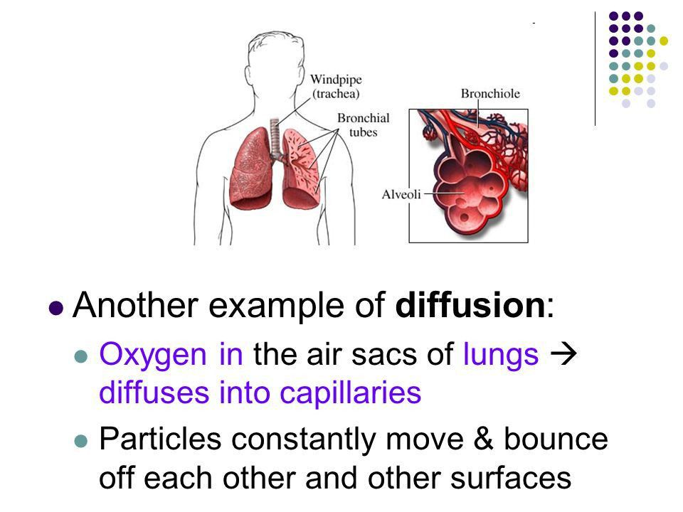 Diffusion & Osmosis Ch 8. Diffusion Definition: Net movement of ...