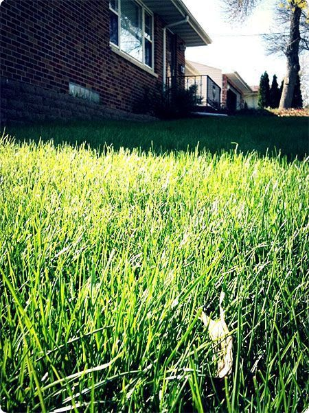 158 best lawn care images on Pinterest | Gardening, Landscaping ...