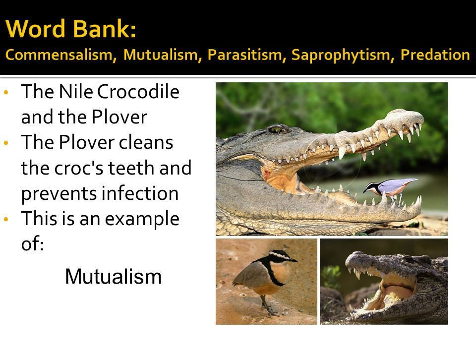 Predation, Scavenging, Symbiosis (3) - ppt video online download