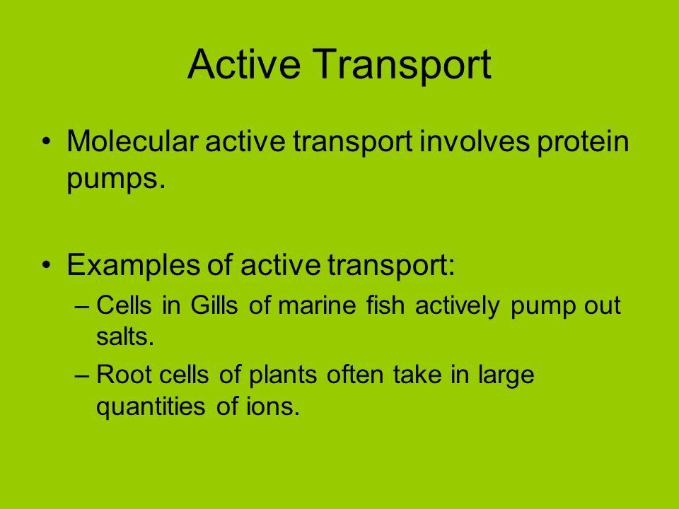 Cell Transport Biology 11. Two parts of a Solution: –Solute A ...