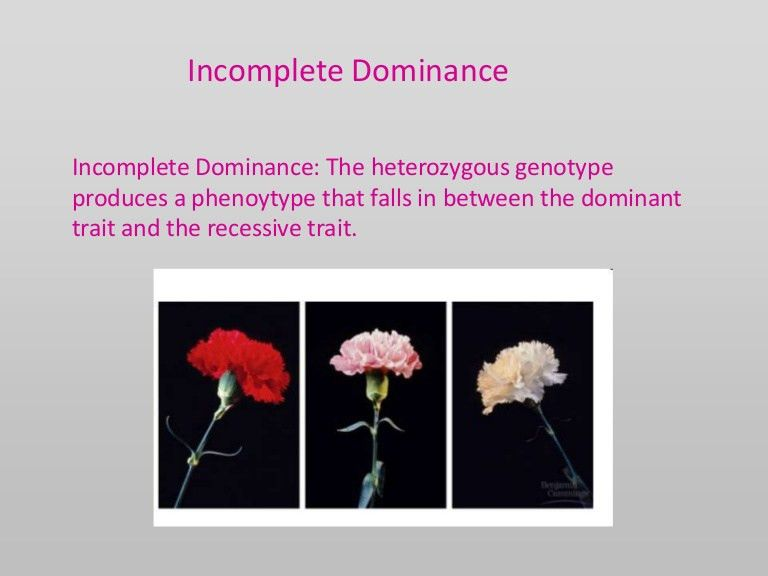 Incomplete and co dominance ppt