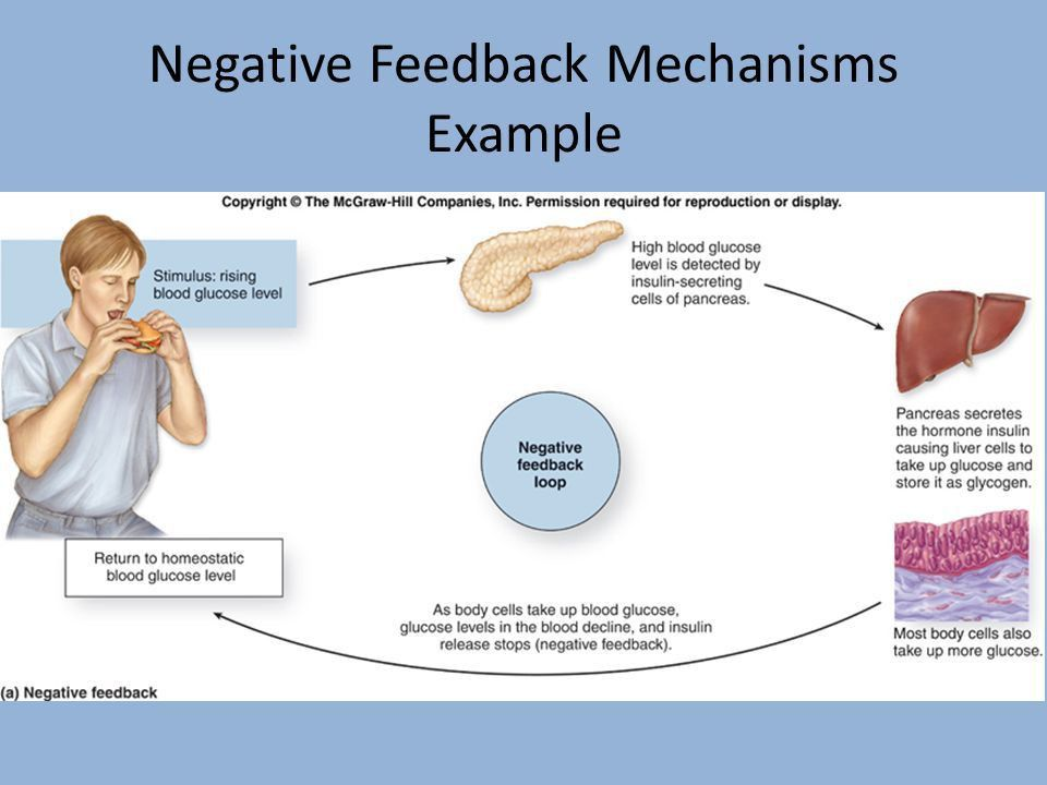 Describe one way your body maintains homeostasis. Put page 1 of ...