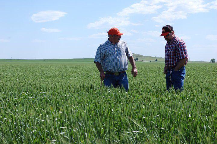 Oklahoma Farm Report - First Day of Kansas Wheat Crop Tour ...
