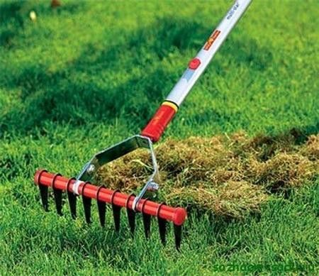 Fall Gardening Tools for Yard Landscaping While Enjoying Bright ...
