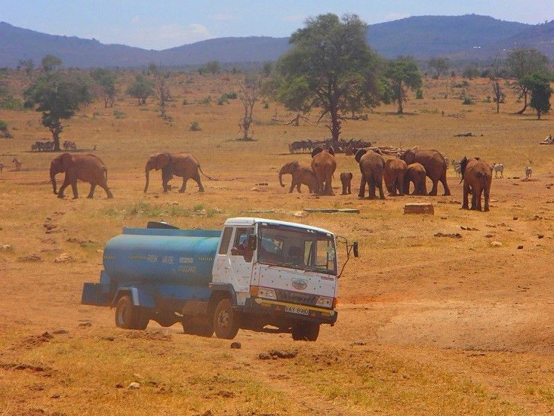 Saving Kenyan wildlife from drought, one truck at a time | Brand ...