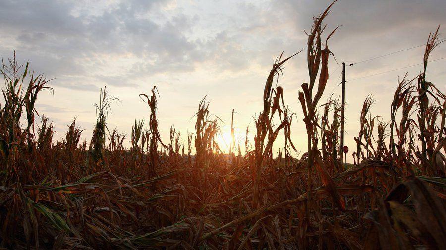 Despite Crop Insurance, Drought Still Stings Farmers : NPR