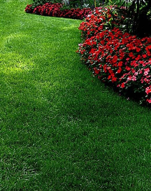 North Texas Lawn Care | Tree and Shrub Care | Christmas Lighting ...