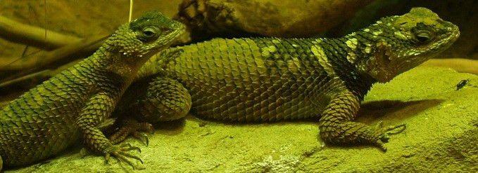 Reptile   Amphibians   Home Study   Herpetology Zoology course -