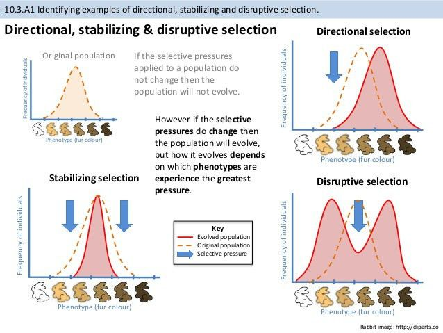 BioKnowledgy Presentation on 10.3 Gene pools and speciation (AHL)