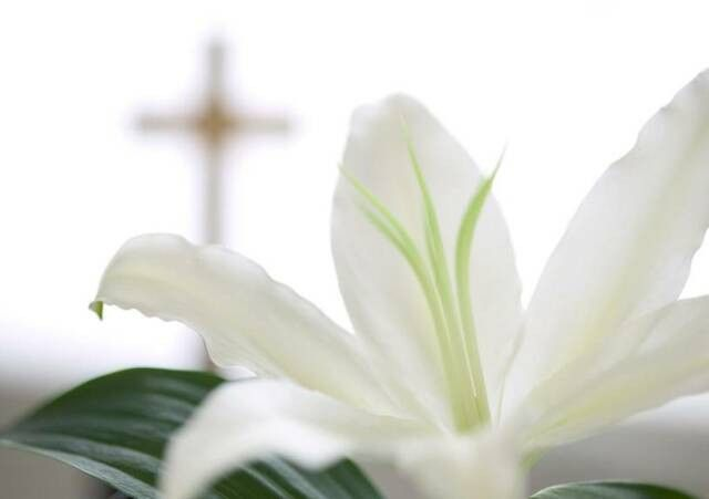 Free Funeral Program Templates | Images Free Funeral Program ...
