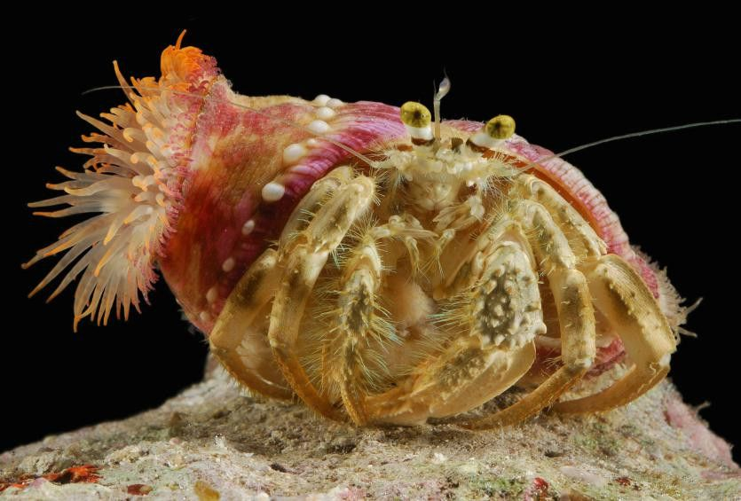 Symbiosis: when living together is win-win | Cosmos