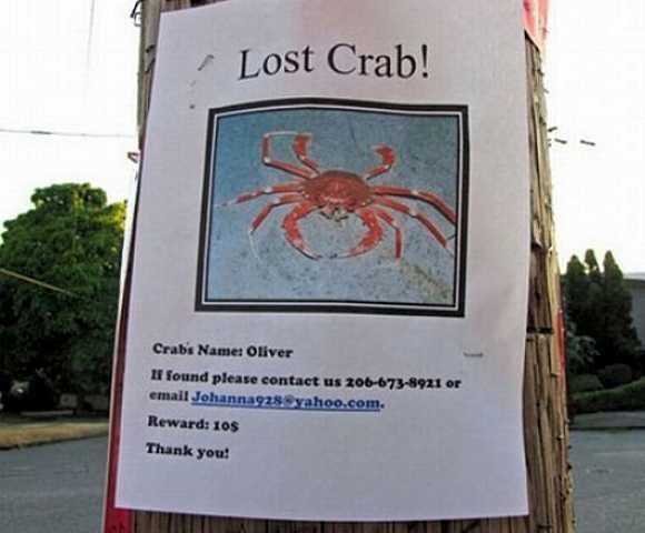 Missing Purr-sons: The Top Ten Wacky Lost Pet Posters   Petslady.com