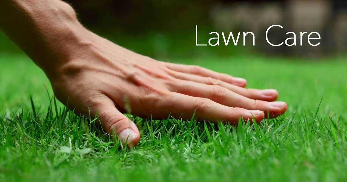 Lawn Care: You Are Not Alone In The Turf War