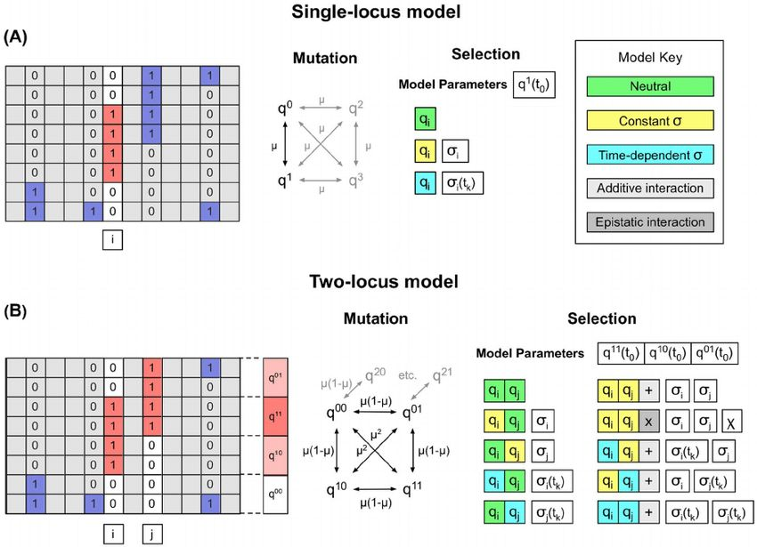 Models of selection. (A) Example single-locus model. A single ...